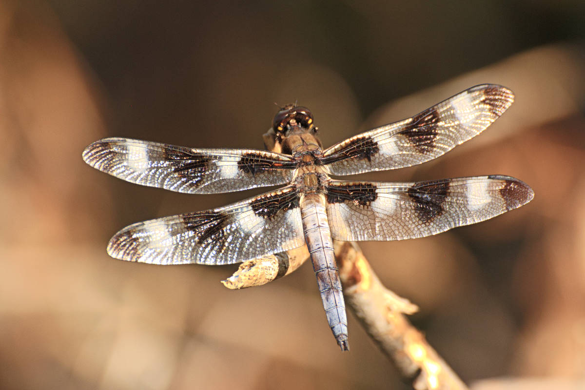 Image Link to Macro Nature Gallery